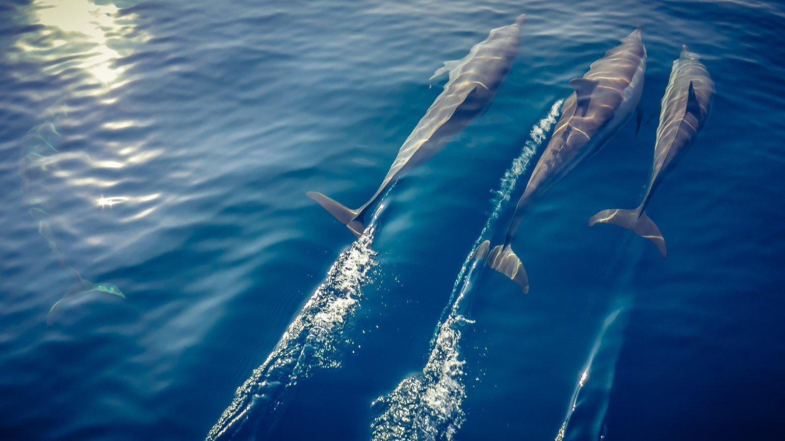 dolphin mladives innahura