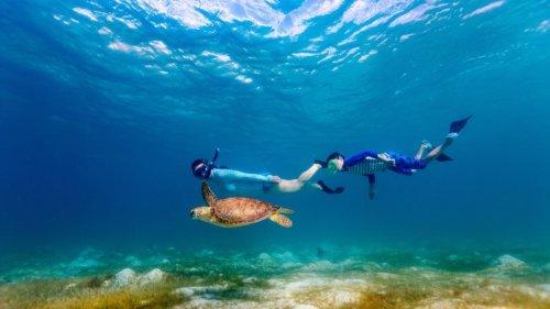 Turtle Snorkel Maldives Innahura