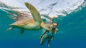 Snorkel with Turtles Innahura Maldives