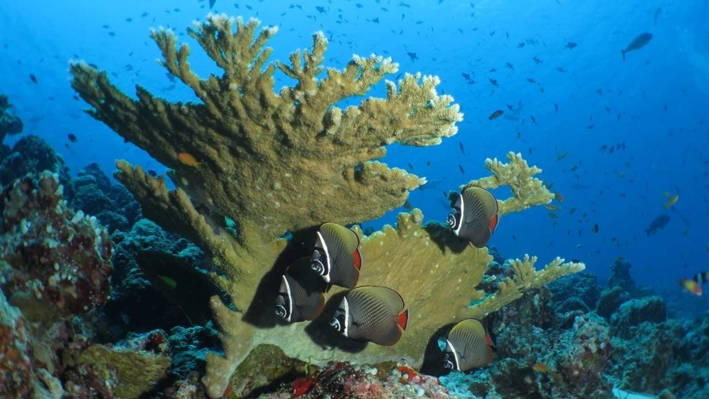 Innahura Maldives Resort House Reef