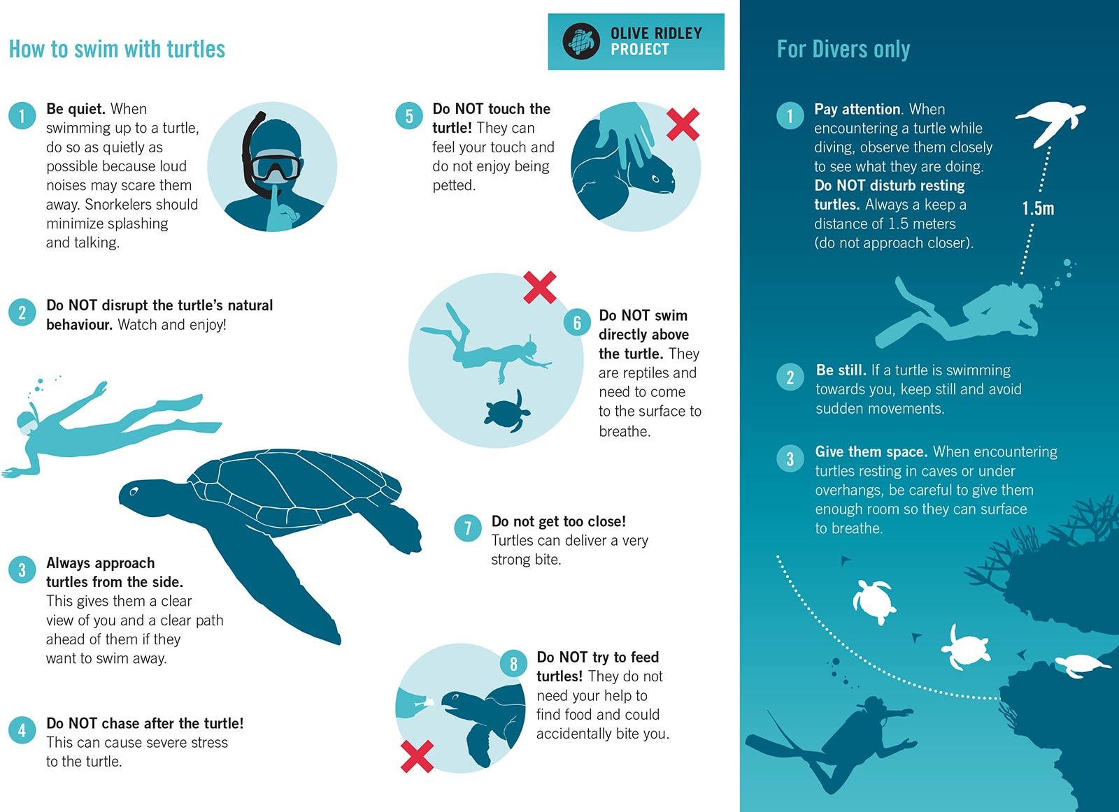 How to Swim with Sea Turtles